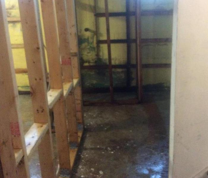 Mold Remediation In Temperance Mi. After
