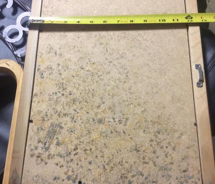 Mold on contents in Sylvania Ohio